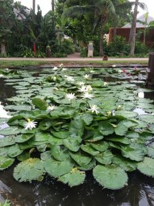 resort is like a lotus